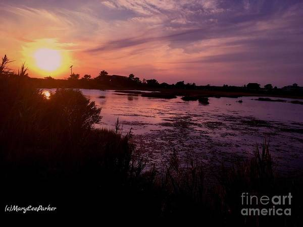Photograph - Summer  Evening by MaryLee Parker