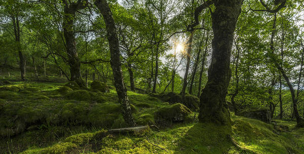 Photograph - Summer Evenings In Wales by Ian Mitchell