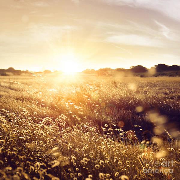 Backlit Photograph - Summer Field by Carlos Caetano