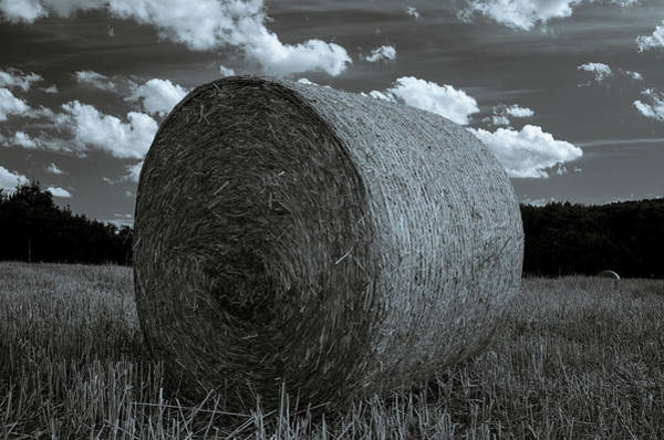 Photograph - Summer Fields by Miguel Winterpacht
