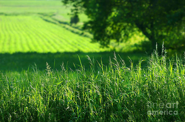 Summer Digital Art - Summer Fields Of Green by Sandra Cunningham