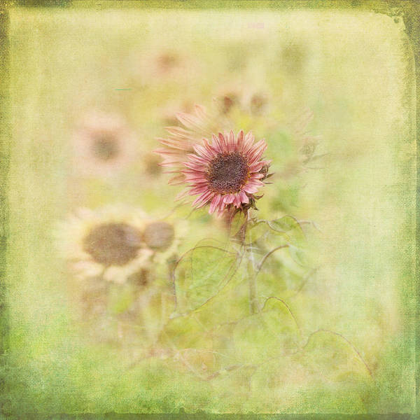 Susan Photograph - Summer Fields by Susan Capuano