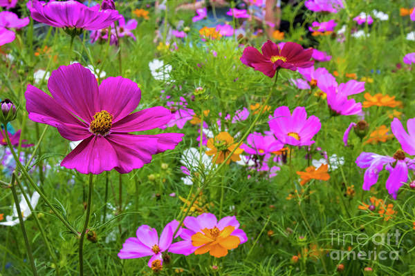 Photograph - Summer Flower Garden by Barbara Bowen
