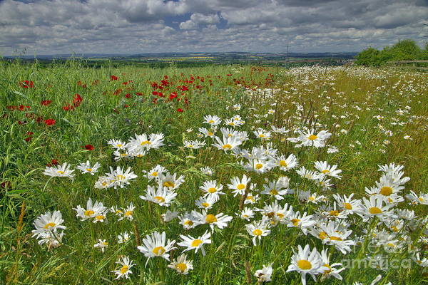 Photograph - Summer Flower Meadows by Martyn Arnold