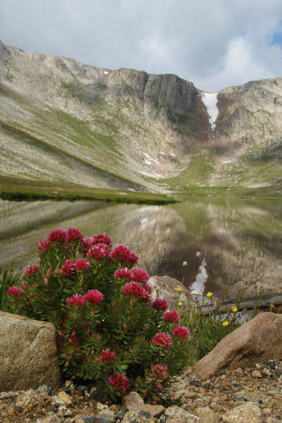 Photograph - Summer Flowers At Summit Lake by Marie Leslie