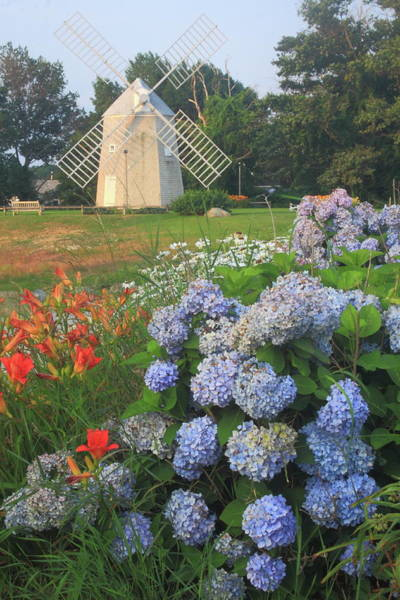 Wall Art - Photograph - Hydrangeas And Lilies At Young Windmill Cape Cod by John Burk