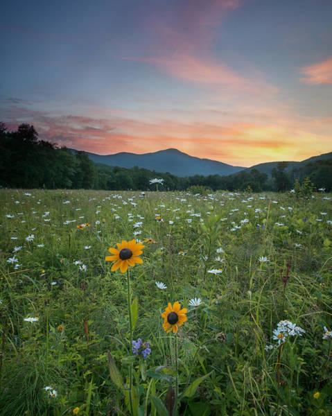 Photograph - Summer Flowers by Darylann Leonard Photography