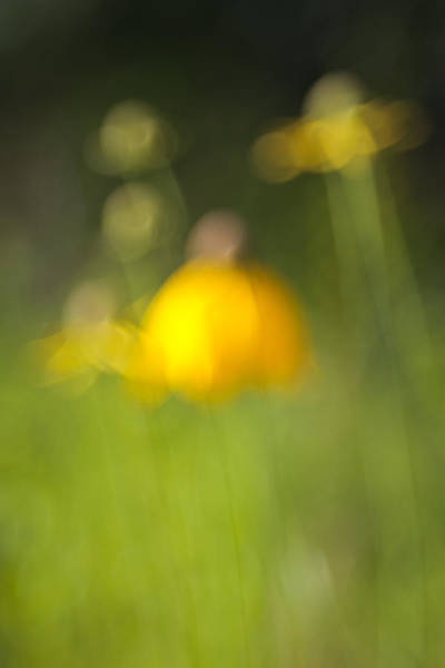 Photograph - Summer Flowers by David Wynia
