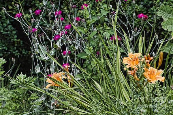 Wall Art - Photograph - Summer Flowers by Edward Sobuta