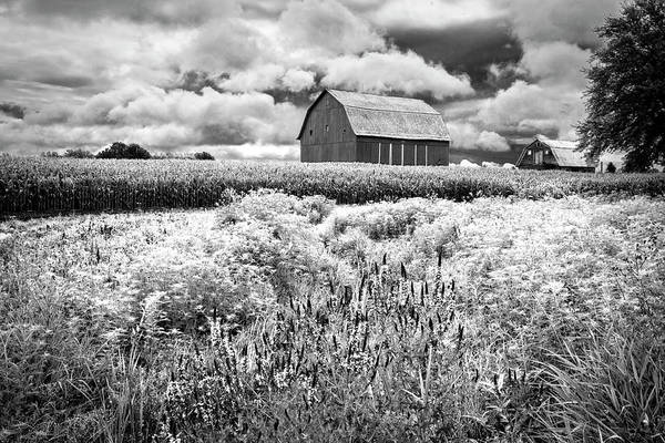 Photograph - Summer Flowers In Black And White by Debra and Dave Vanderlaan