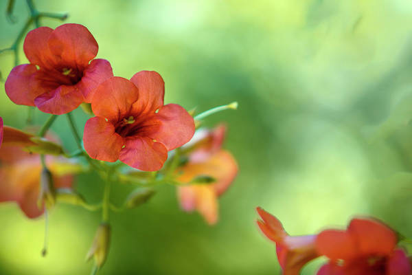 Red Green Photograph - Summer Flowers by Nailia Schwarz