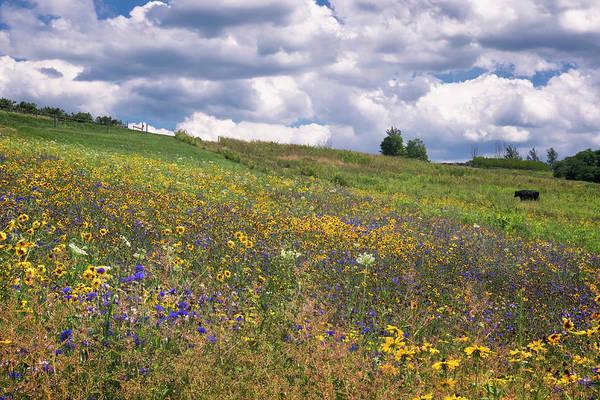 Photograph - Summer Flowers by Tom Singleton