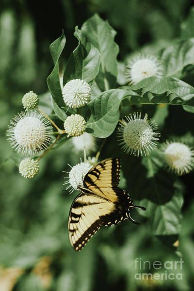 Wall Art - Photograph - Summer Fly by Iris Greenwell