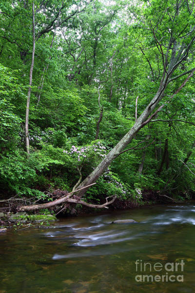 Photograph - Summer Foliage Along The Patapsco River Maryland by James Brunker