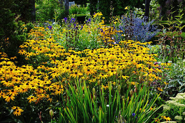 Wall Art - Photograph - Summer Garden by Debbie Oppermann