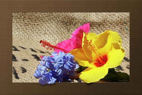 Plumbaginaceae Photograph - Summer Garden Flowers by Phyllis Denton