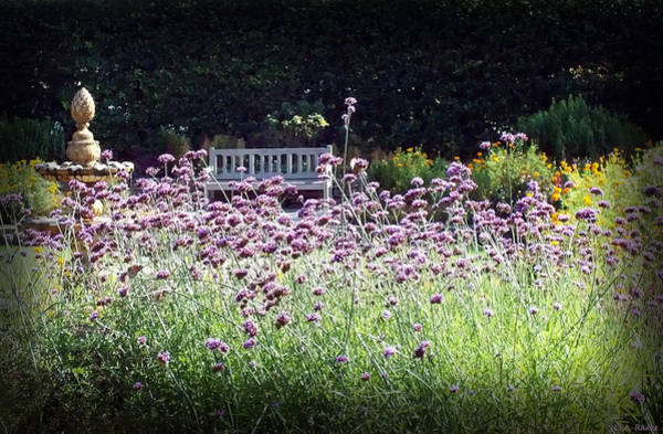 Photograph - Summer Garden II by Lauren Radke