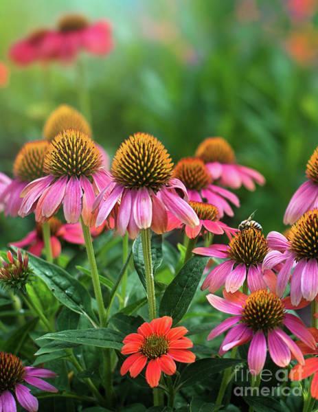 Photograph - Garden Gathering by Susan Warren