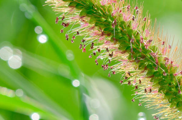 Photograph - Summer Grass by Katie Joya
