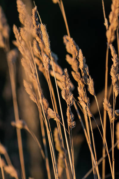 Photograph - Summer Grass by Robert Potts
