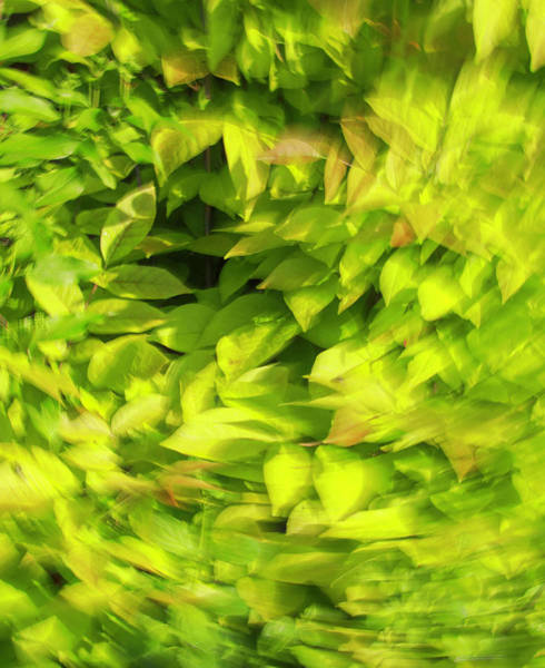 Photograph - Summer Green Blur by Dan Sproul