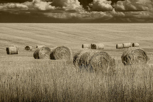Summer Harvest Field With Hay Bales In Sepia Art Print