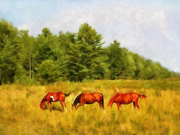 Digital Art - Summer Hay Burners by JGracey Stinson