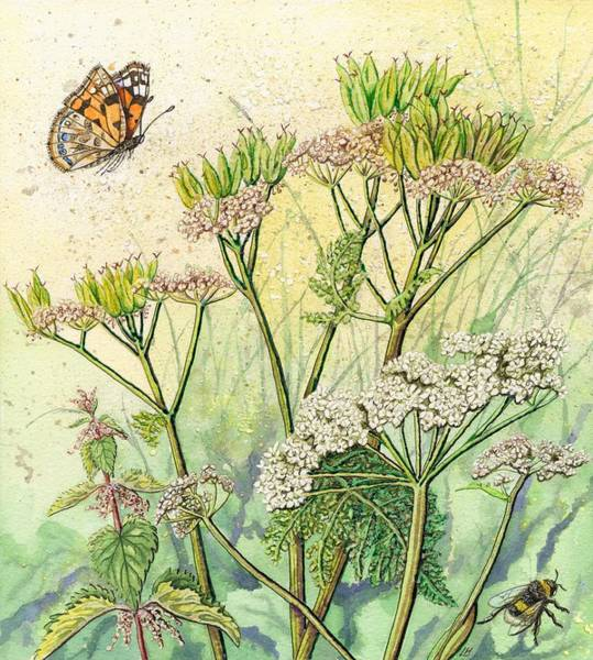 Wild Chervil Wall Art - Painting - Summer Hedgerow by Lynne Henderson