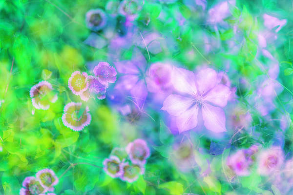 Photograph - Summer Impression Series - Flowers by Ranjay Mitra