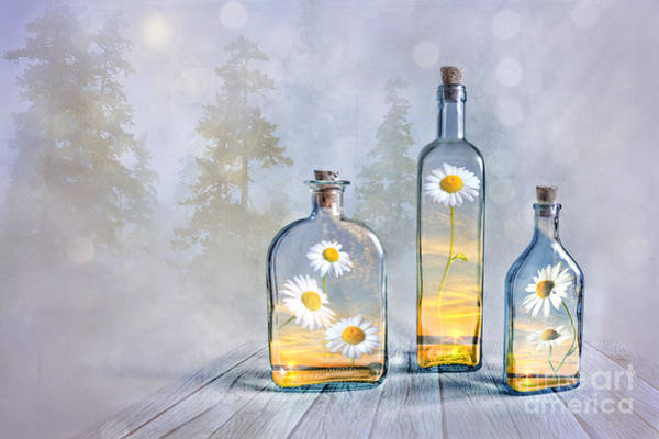 Finland Photograph - Summer In A Bottle by Veikko Suikkanen