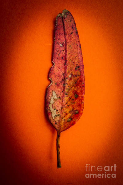 Single Leaf Wall Art - Photograph - Summer In Decay by Jorgo Photography - Wall Art Gallery
