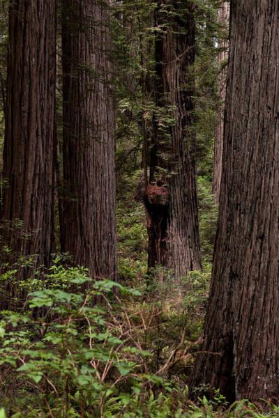 Photograph - Summer In Redwood National Park Vertical by Alexander Fedin