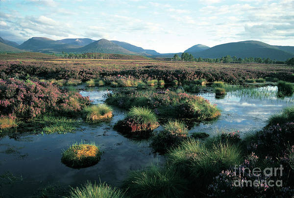 Photograph - Late Summer In The Cairngorms by Phil Banks