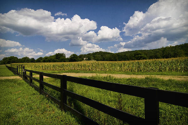 Photograph - Summer In The Country by Patricia Montgomery