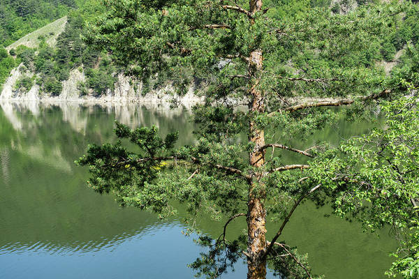 Photograph - Summer In The Mountains - Forest Lakes And Pine Trees Beauty by Georgia Mizuleva