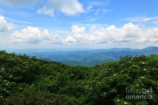 Photograph - Summer In The Nc Mountains by Jill Lang