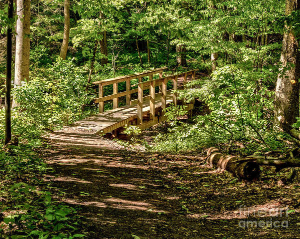 Photograph - Summer In The Woods by Rod Best