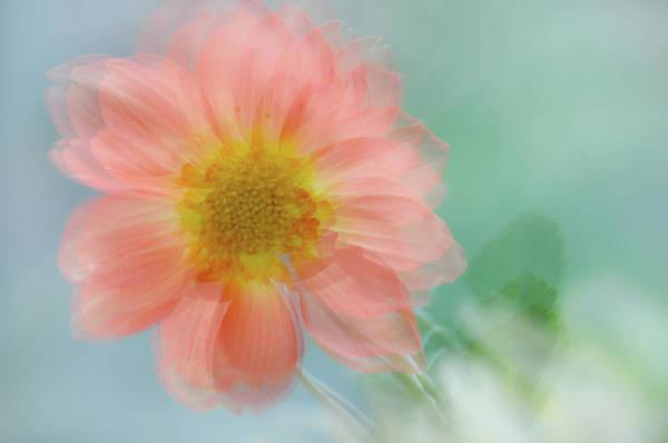 Photograph - Summer Joy by Jenny Rainbow