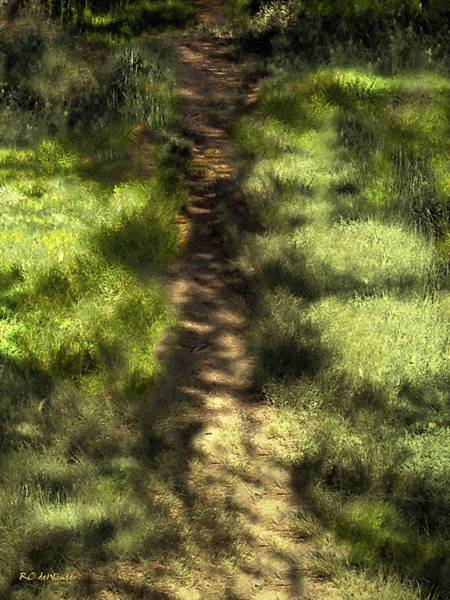 Painting - Summer Light And Shadow by RC DeWinter