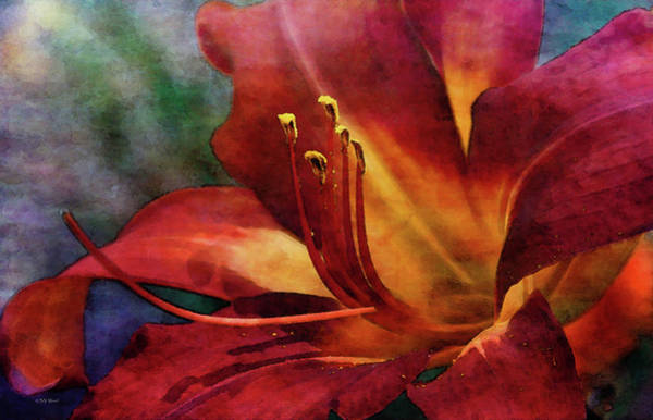 Photograph - Summer Lily 3678 Idp_2 by Steven Ward