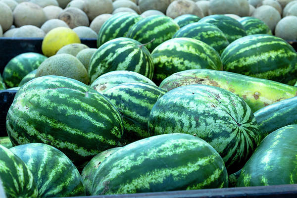 Photograph - Summer Melons by Teri Virbickis