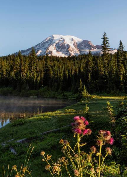 Summer Morning At Mt Rainier Art Print