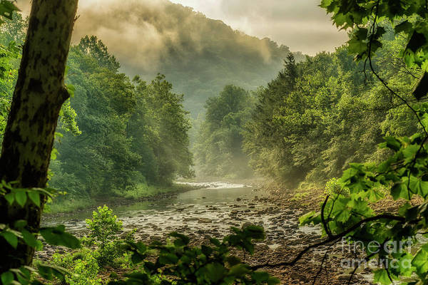 Photograph - Summer Morning On Williams River by Thomas R Fletcher