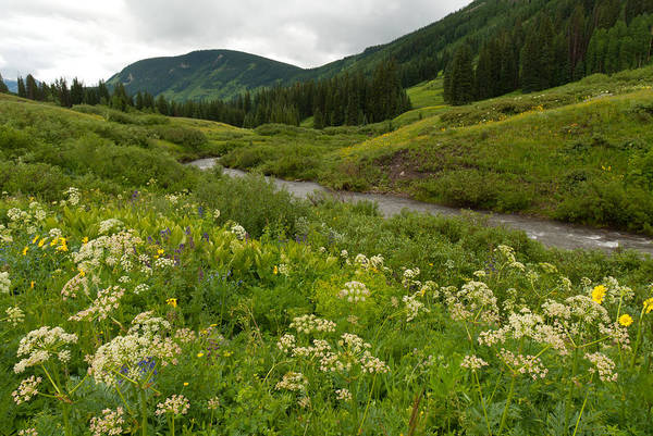 Photograph - Summer Mountain Stream And Meadow Landscape by Cascade Colors