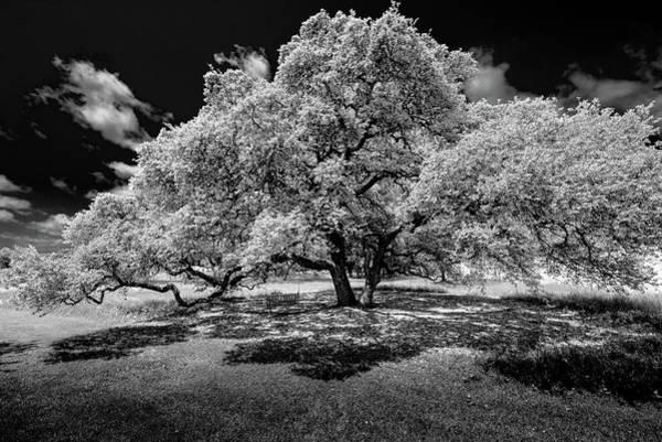 Summer Time Photograph - A Summer's Night by Darryl Dalton