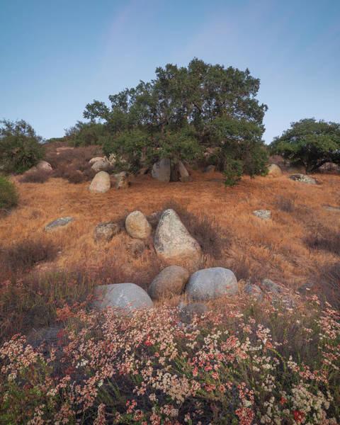 Photograph - Summer Oak by Alexander Kunz
