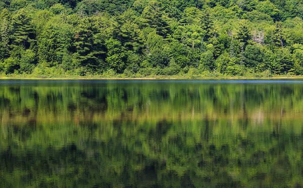 Photograph - Summer Of Green Reflections by Rachel Cohen