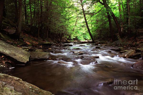 Photograph - Summer On Big Hunting Creek by Thomas R Fletcher