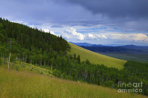 Photograph - Summer On Kenosha Pass by Barbara Schultheis