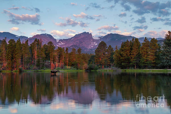 Wall Art - Photograph - Summer On Sprague Lake by Ronda Kimbrow